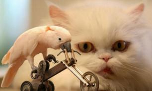Как домашние животные влияют на психоэмоциональное состояние человека?