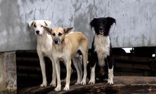 В Китае миллионер влез в долги, чтобы ухаживать за собаками
