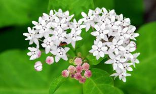 Комнатные растения: каких лучше избегать
