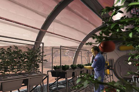 Ученые из Сибири намерены использовать чешую и рыбные кости для строительства баз на Марсе