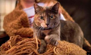 """Кошачий """"массаж"""": почему коты топчут хозяев"""