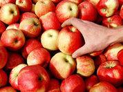 Пока хозяин в Ираке, в ЕС гниют яблоки