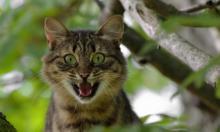 Странное поведение вашей кошки: как расшифровать