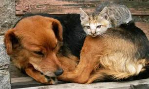 Как относятся к собакам в разных странах