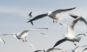 Под Омском массово отравились чайки