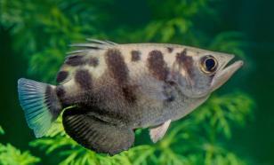 Рыбы способны узнать человека в лицо