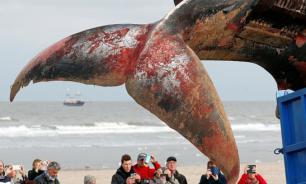 Кит весом тридцать пять тонн обнаружен на пляже в Бельгии