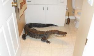 Домашние крокодилы: правила ухода и содержания