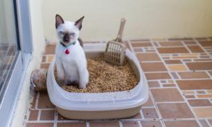 Десять причин, почему кошка не ходит в лоток