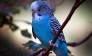 Попугай: неприхотливый питомец, ценящий хорошую беседу