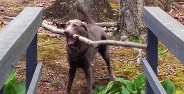 Как собаки решают сложные проблемы. Видео