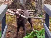 Как собаки решают сложные проблемы