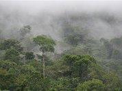 Амазонские леса сами вызывают дождь