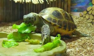 Черепаха дома: что нужно знать
