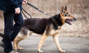Собаки-поводыри - как они становятся членами семьи