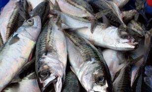 За 4 месяца 2016 года экспорт рыбной продукции сократился на 11%