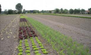 Кислотность почвы: почему она важна и как ее определить
