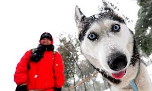 Площадки для собак обустроят во всех жилых районах Москвы