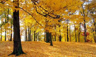 Свердловские депутаты разрешили жителям области собирать ветки и листья в лесу