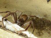 Старшие пауки заботятся о младших