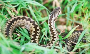 Николай Дроздов: как вести себя при встрече со змеями