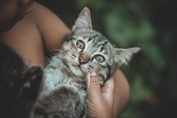 Почему мурлыкают кошки