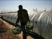 Испания борется с нелегалами безработицей