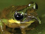 Индонезийские леса скрывали чудо-животных