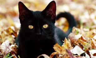 Судебные приставы выселили 45 кошек из зловонной квартиры-приюта