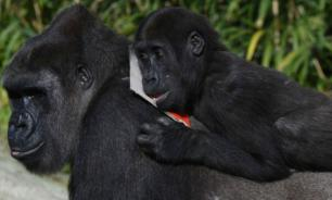 Урок для мужчин из мира животных: самые плодовитые самцы помогают в уходе за малышами