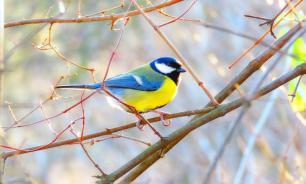 Из Омска массово улетают птицы