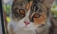 Выводы ученых: первые прирученные кошки появились не в Египте, а на территории Турции