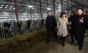 Участок в 7 тыс. га получили вьетнамцы на молочный комплекс под Волоколамском