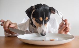 В собачьем корме найдено средство для эвтаназии