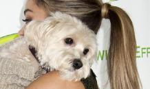 Муси-пуси: гламурные собаки