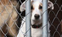 Почему животные продолжают любить своих мучителей