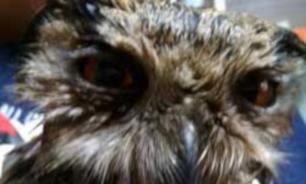 В Челябинске спасли сову, занесенную в Красную книгу