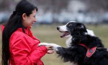 Понимают ли собаки нашу речь?