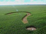 Выгодно ли в России быть фермером?