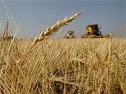 Черви, проедающие сельское хозяйство России