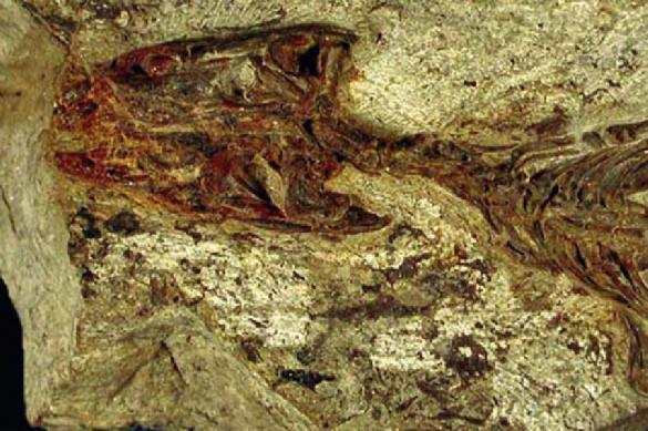 Найдена ящерица, жившая 140 млн лет назад