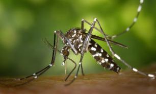 Лихорадка денге. Симптомы, диагностика, лечение