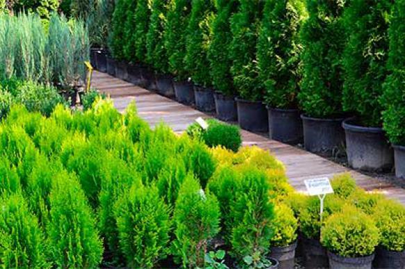 Худшие питомники растений определили в рунете