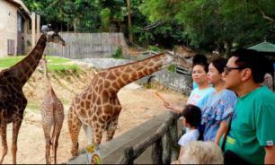 Зоопарк Таиланда приглашает посетителей на ночное сафари