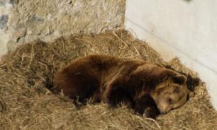 Животные Московского зоопарка готовятся к спячке