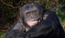 Армия РФ: В бой идут боевые обезьяны