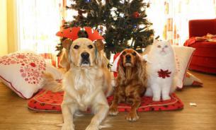 Домашние питомцы в праздничные дни: как уберечь от опасности