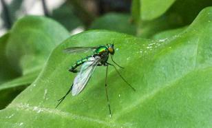 Власти Таганрога оправдываются за миллионы огромных комаров