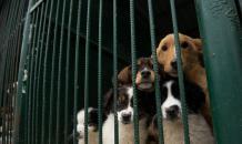 В Оренбурге заведено уголовное дело по факту гибели 65 собак и кошек