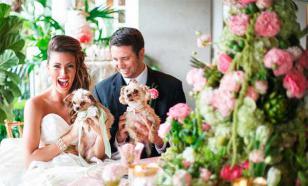 Свадьбы домашних животных нынче в моде